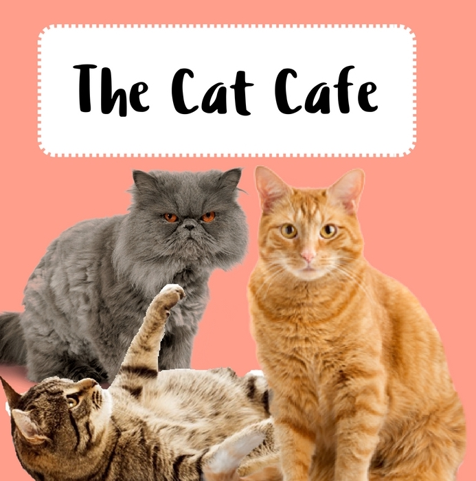 Cat Cafe Barcelona